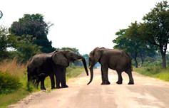 Elefanten im Caprivi